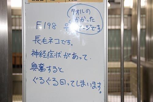 198 (2).jpg