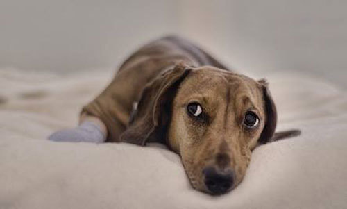 Dog-anxiety-N.jpg