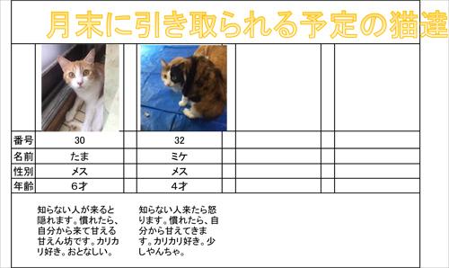 bibaineko-2s.jpg