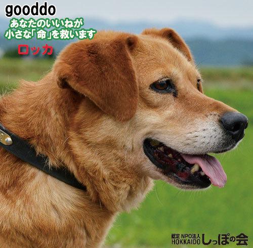 gooddo9.21.jpg