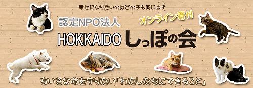 kifu001.jpg
