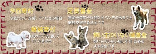 kifu002.jpg