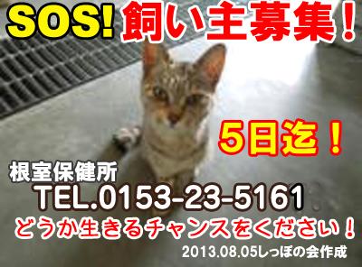 nemuro8.5.jpg