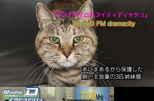 2013.7.8.jpg