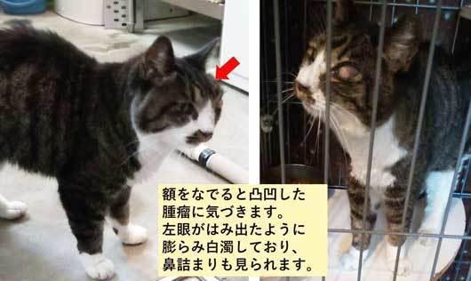 210719負傷猫s.jpg