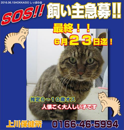 6.15kamikawa.jpg
