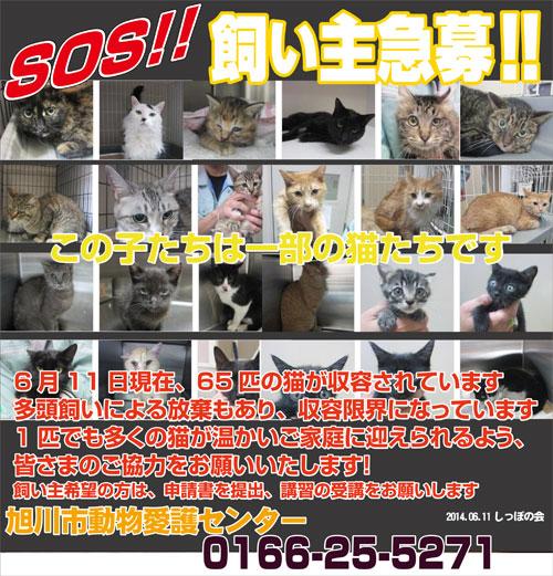 611asahikawa.jpg