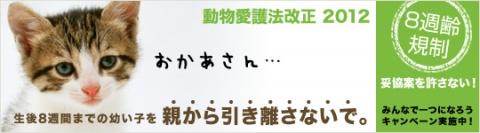 8syu_b_main_L21.jpg