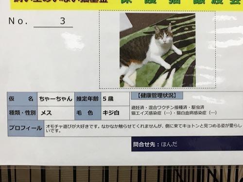 ちゃーちゃん.jpg