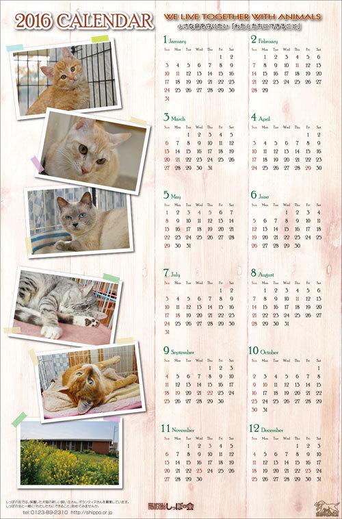 一枚物カレンダー猫.jpg