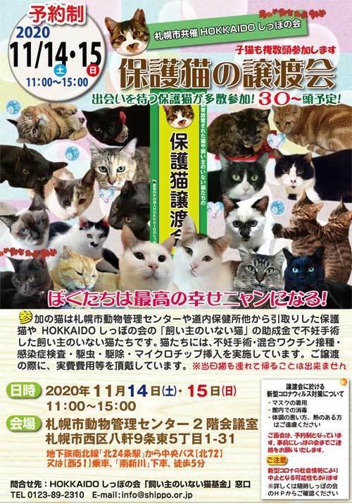 札幌市共催譲渡会2020.11.14s.jpg