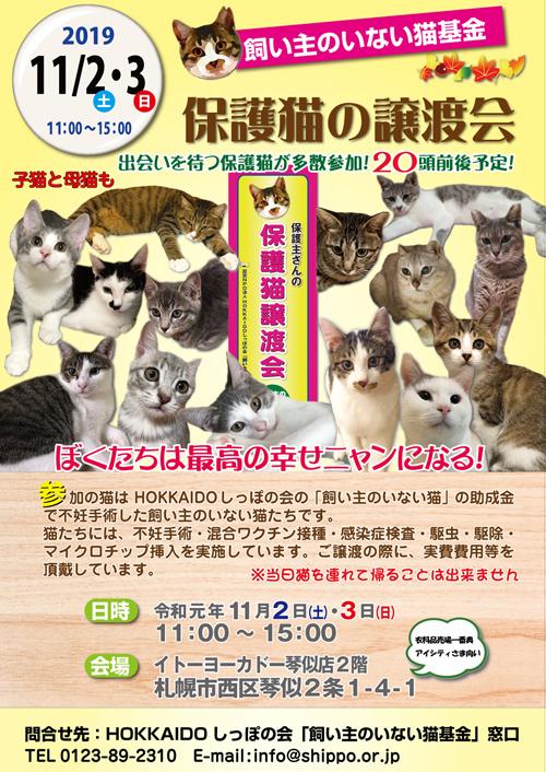猫基金譲渡会2019.11.2.3s.jpg