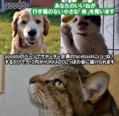 gooddo142.jpg