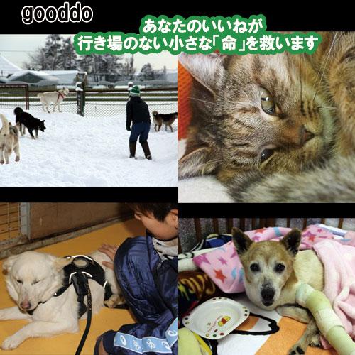 gooddo3.jpg