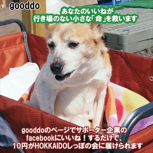 gooddo5.jpg