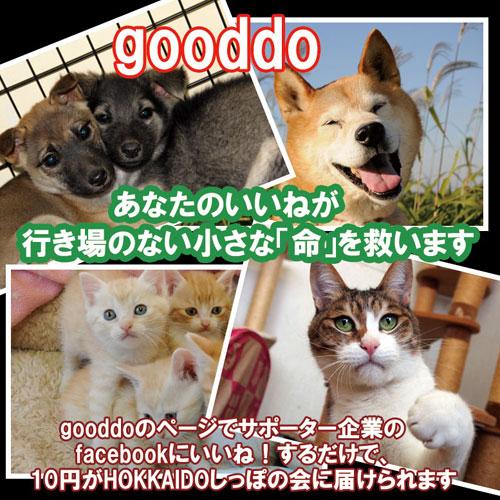 gooddo500.jpg