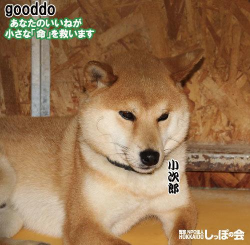 gooddo8.9s.jpg