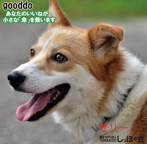 gooddo9.7.jpg
