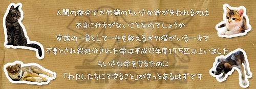kifu003.jpg