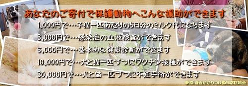 kifu004.jpg