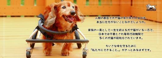onlinekifu-3.jpg