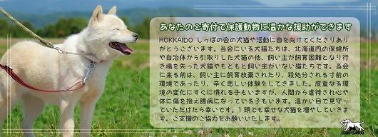 onlinekifu5.jpg
