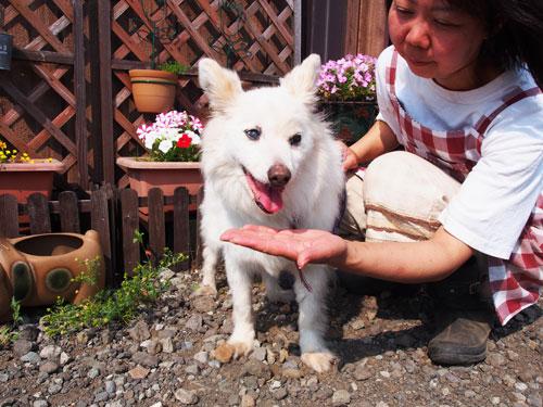 shinobu9.jpg
