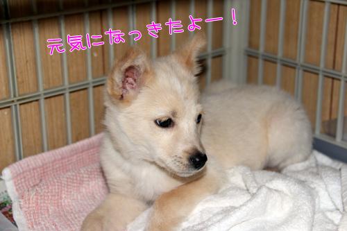 suzuran2.jpg