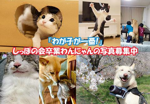wagaichi2020.jpg